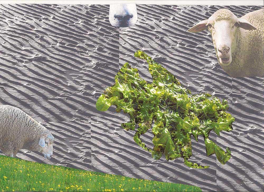 Hauke das Schaf
